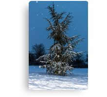 Fir Tree and snow Canvas Print