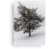 Fir Tree in winter Canvas Print