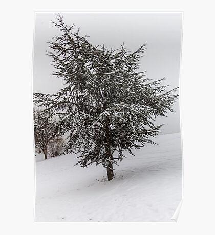 Fir Tree in winter Poster