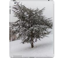 Fir Tree in winter iPad Case/Skin