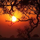 Bushfire sunrise by SDJ1
