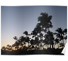 Sunset in the Dominican with palms in silhouette Poster