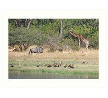 Wildlife Paradise, Moremi Game Reserve, Botswana, Africa Art Print