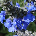 Blue Flowers Tall Stems by bloomingvine