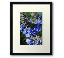 Blue Flowers Tall Stems Framed Print
