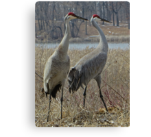 Cherokee Marsh Sandhill Cranes  Canvas Print