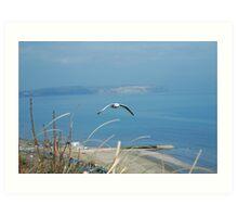Seagull Over Sandown Art Print