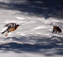 Learning to Fly by lloydsjourney