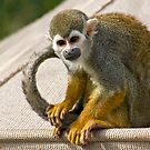 Squirrel Monkey by Sue  Cullumber