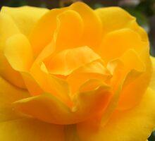 Fleur Jaune by JinkiT