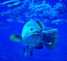 In the eye of the Grouper by Dennis Stewart