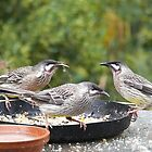 4 & 20 Wattlebirds baked in a pie..! by Larry Lingard-Davis