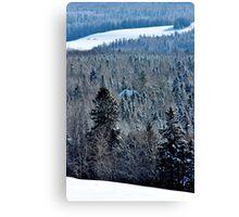 Hidden in the Winter Woods Canvas Print