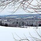 Winter Fields & Woods by Kathleen Daley