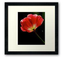 Vivid Light Framed Print