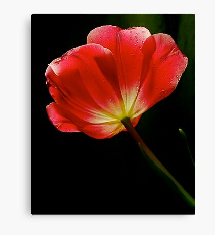 Vivid Light Canvas Print