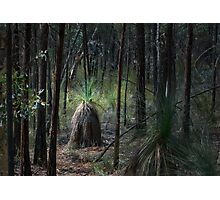 Conimbla Woodlands Photographic Print
