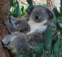 Mum and baby Koala by Gareth Rowlands