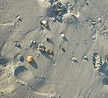 Footprints in the Sand by scrapper