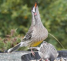 Singing for his supper... by Larry Lingard-Davis