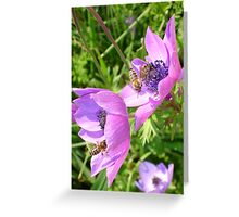 Honey Bees Feeding On  Pink Anenome Flower Blossom Greeting Card