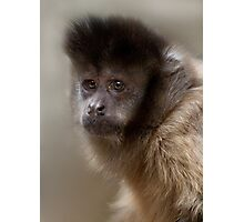 Black-Capped Capuchin  Photographic Print