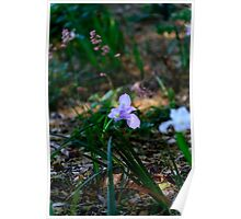 Springtime at U.C. Davis arboretum Poster