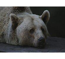 A Bear's Life Photographic Print