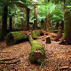 Manfern Forest by Keith G. Hawley