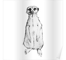 meerkat,drawing, pencil ,sketch Poster