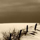Fence Line by John Beamish