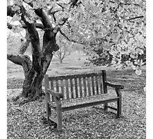 Blossom bench Photographic Print