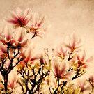 Magnolia by lucyliu