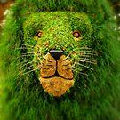 Camouflage by artisandelimage