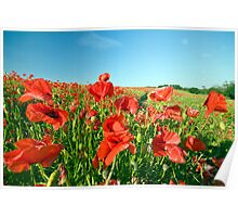 Poppies In The Wind Poster