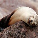 Sleeping  Beauty by Steve Bulford