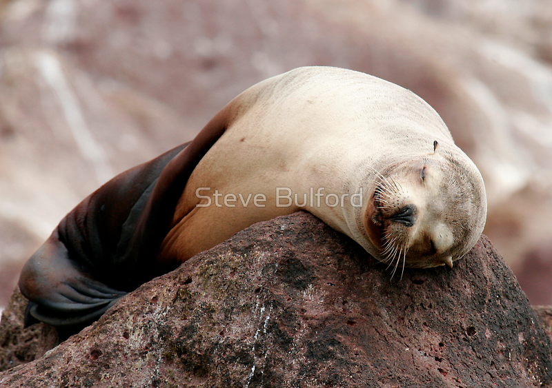 Sleeping  Beauty by Steve Bulford