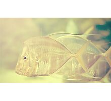 Tropical Fishes Photographic Print