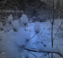 Flowers of winter I by Laura60
