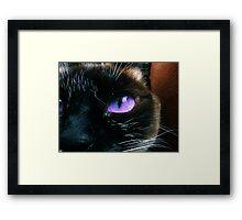 Whiskers Framed Print