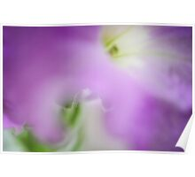 Purple Veil. Petunia Macro Poster