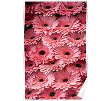 Pink Peach Gerbera. Amsterdam Flower Market Poster