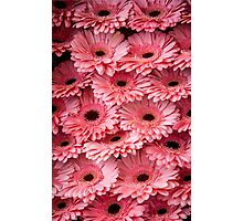 Pink Peach Gerbera. Amsterdam Flower Market Photographic Print