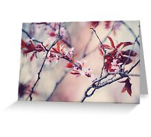 Icy Cherry Bloom. Pink Spring in Amsterdam Greeting Card