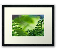 Fern Leaves. Healing Art Framed Print