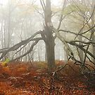 The spider tree by jchanders