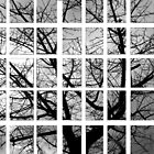 Pieces of Winter by Danit Elgev