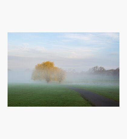 Soft Willow Morning Photographic Print