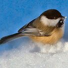 Black capped chickadee by Sheri Nye