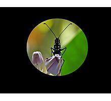 Alien Scout Photographic Print